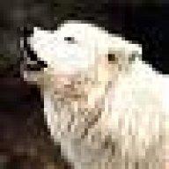 wy_white_wolf